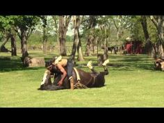 This Horse Doing Yoga Will Make You Uncomfortable But It's Actually Very Sweet
