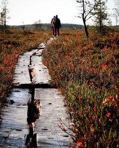 Nice autumn day for hikeing 🍂❤️🍂 . . . #retkeilemässä #tänään #syksy #martimoaapa #simo #finland #hikeing #today #swamp #duckboards #autumn… Lapland Finland, The Great Outdoors, Natural Beauty, Country Roads, Mood, Explore, Nature, Instagram, Design