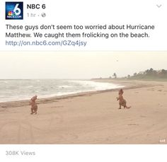 How real Floridians feel about all hurricanes