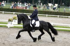 13 year-old approved Friesian stallion Arjen 417died suddenly (April 2013). During his short life, he had a big impact on the quality of the breed, including 80 star offspring, 4 Crown predicates, 1 Model daughter, and 1 approved son (Wytse 462).