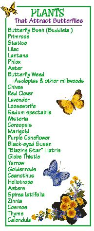 "Plants That Attract Butterflies (follow link for more: ""Tips to Help Attract Butterflies to Your Garden"")"