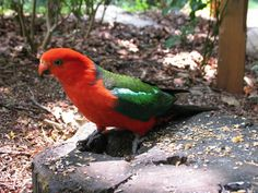 Head on up to the Dandenong Ranges for a great day out with the family. Pack a picnic lunch and throw in a few bits for the wildlife you will encounter. Feed the parrots up at Grant's Picnic Ground. Fun day trip from Melbourne