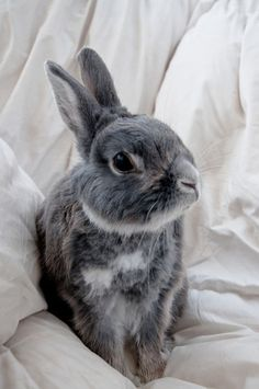 The daily bunny Cute Creatures, Beautiful Creatures, Animals Beautiful, Grey Bunny, Cute Bunny, Animals And Pets, Baby Animals, Cute Animals, Daily Bunny