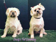 New look #petgrooming #dogfood #spaday #deslyspg #losangeles #downtownla #artdistrict #dtla #lalive #usc #adams #santamonica #venicebeach…