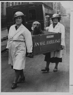 Two nurses from the National Air Raid Precautions Animal Committee bringing an injured Airedale Terrier, injured during an air raid, to an animal hospital, 1940.