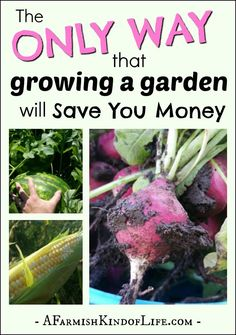 Does planting a garden save you money? Yes, it does. But only if you follow this simple tip.