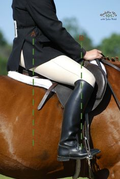 We are all taught to make sure our stirrups are the right length.  Not too long and not too short. Did you know that the position of your saddles stirrup bars is just as important? Find out why here.