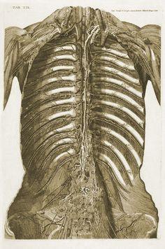 Anatomical plate. Vasorum lymphaticorum corporis humani historia et iconographia, (Siena, 1787). Author: MASCAGNI, Paulo (1755–1815 https://pinterest.com/pin/287386019947498474). Artist: Ciro Santi.