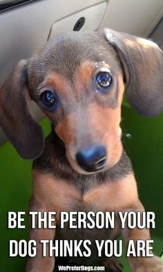 .Be the Person your Dog thinks you are!! This is the most inspiring thing I have ever read!