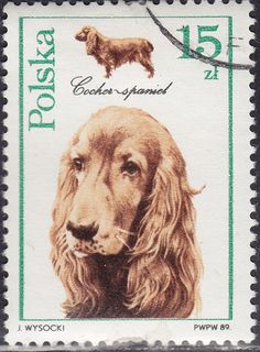 Poland 2901 Dogs Cocker Spaniel 1989 in Europe > Poland Canis Lupus, Postage Stamp Art, English Cocker Spaniel, Vintage Dog, Vintage Stamps, Dog Portraits, Art Journal Inspiration, Stamp Collecting, Pet Birds