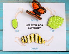 Easy Butterfly Cookies -Cut Out Sugar Cookies Decorated with Royal Icing-Step by Step Tutorial via thebearfootbaker.com