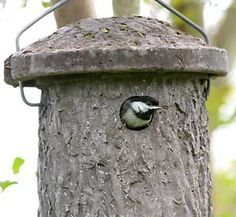 Concrete birdhouses attract chickadees and other cavity nesting birds