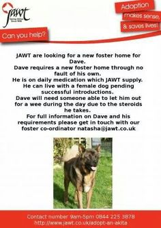 Dave needs a home to call his own or a new temporary foster.  Can you help?