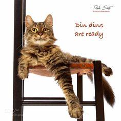 Din Din Time