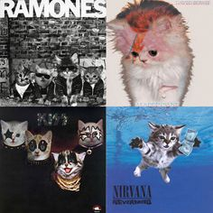 Cat Album Covers Love the KISS one!!