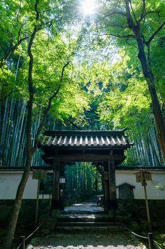 京都、竹林に囲まれた「竹の寺」地蔵院
