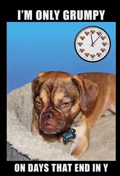 The world's grumpiest dog! Earl's permanently miserable looks are set to make him a star