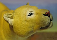 Puma concolor (Safari Ltd - Wildlife Wonders) - Animal Toy Forum
