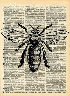 Bee Print - Vintage Dictionary Art Print - Natural History Insect Art - Upcycled Altered Art Book - Rustic Home Decor Print - Art✍️ - Natural Form Art, Natural Forms Gcse, Gcse Art Sketchbook, Altered Book Art, Altered Tins, Book Page Art, Art Pages, Bug Art, Insect Art