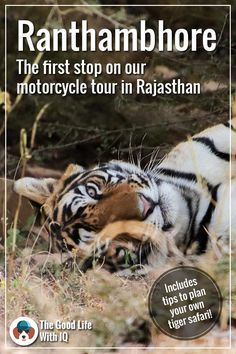 Ranthambhore National Park, the first stop on our Rajasthan motorcycle tour. Includes tips on how to plan your own tiger safari. Best Bible Quotes, Bible Verses, Waterloo Sunset, The Kinks, Love Band, Peace Quotes, Peace On Earth, India Travel, Lonely Planet