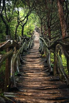 The hard path, wood stairs through the forest in Taichung, Taiwan // Hanson Mao