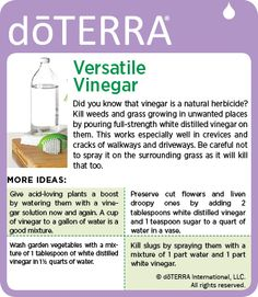 From cleaning to plants to pests. there are so many great ways to use vinegar! Essential Oils Cleaning, Therapeutic Grade Essential Oils, Essential Oil Uses, Doterra Recipes, Doterra Essential Oils, Natural Cleaning Products, Natural Solutions, Natural Oils, Natural Health