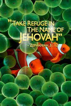 Take refuge in Jehovah.