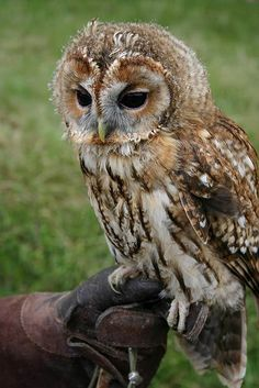 I like the angle and the look of this owl.  This is basically what I'd like my tattoo fashioned after.