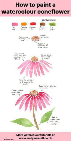 Tutorial: How to Paint a Watercolour Coneflower - Emily Wassell Watercolor Art Lessons, Watercolor Paintings For Beginners, Watercolor Tips, Watercolor Cards, Watercolor Illustration, Watercolour Painting, Floral Watercolor, Watercolours, Watercolor Flowers Tutorial