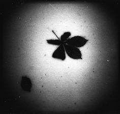 A Photo by emkei - Lomography Leaf Tattoos, Print Tattoos, Lomography, Winter Time