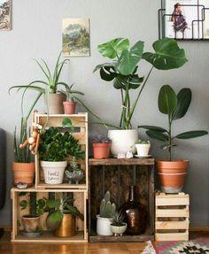 Unieke urban jungle in fruitkistjes