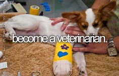 Or Vet Tech... anything to do with animals :)