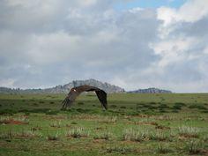 9 Dagen Trip: Vogelspotting in Mongolië   Ying Ying Travel