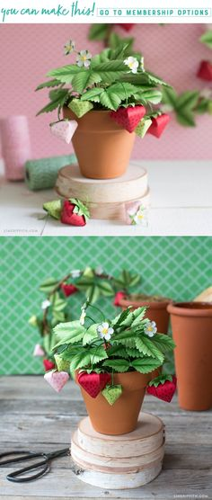 Fresh Picked  Now you can have fresh strawberries all summer long with this potted paper strawberry plant. It's incredibly adorable and simple to make. Plus, thanks to our friends @paperpapers, we are giving you this pattern for FREE. ⠀⠀⠀⠀⠀⠀⠀⠀⠀ https://liagriffith.com/potted-paper-strawberry-plant/⠀⠀⠀⠀⠀⠀⠀⠀⠀ *⠀⠀⠀⠀⠀⠀⠀⠀⠀ *⠀⠀⠀⠀⠀⠀⠀⠀⠀ *⠀⠀⠀⠀⠀⠀⠀⠀⠀ #ad #diy #diyidea #diyideas #summer #summertime #strawberry #strawberries #paper #papercut #papercraft #papercrafts #paperlove #paperart #diycraft…