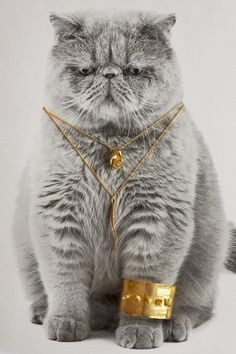 ZsaZsa , Kitty dressed with her best jewelry. LOL TG