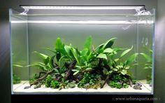 A planted aquarium displayed on www.urbanaquaria.com. The tank is 60 cm x 30 cm x 36 cm