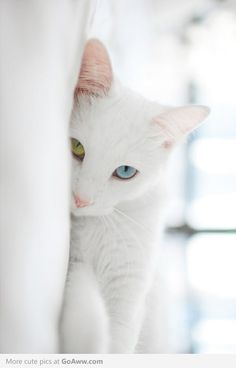 Pretty kitty!!! Cool eyes!!!