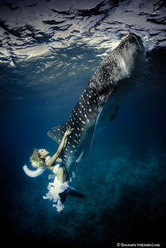 Stunning Whale Shark Photos Aim to Help At-Risk Species by Shawn Heinrichs