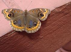Olhares.com Fotografia | �Sidney Ganho | Fly Madame.... Fly!