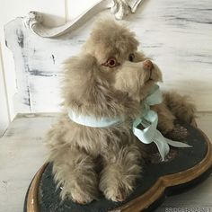 1910 French Mohair Pajamas Dog Case Boudoir Doll Toy Vanity from bridgetscc on Ruby Lane