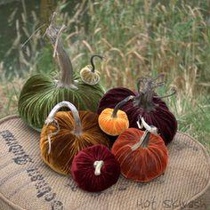 Shop Online - Velvet Pumpkins by Hot Skwash