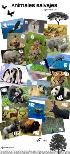 Vocabulario de los animales