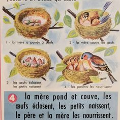 This is a classic French school poster with a botanical design, showing spring planting on one side, with a wonderful series of illustrations about birds. Vintage Birds, French Vintage, French Industrial Decor, Birds And Their Nests, Bird Poster, French School, School Posters, Antique Clocks, Planting