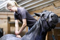 Check out these alternative therapies to help to keep your #horse healthy and comfortable