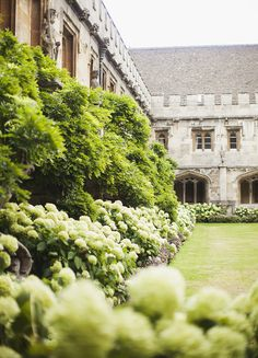 Oxford (by Carrie WishWishWish)
