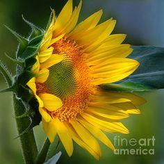 http://fineartamerica.com/featured/summer-bonnet-nava-thompson.htm