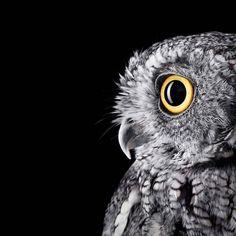 Affinity – Les incroyables portraits d'animaux du photographe Brad Wilson