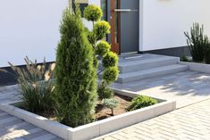 Designing the front yard: 10 tips! Designing the front yard: 10 tips! Patio Plants, Indoor Plants, Modern Front Yard, Hydrangea Care, Different Plants, Fence Design, Patio Design, Plantar, Front Yard Landscaping