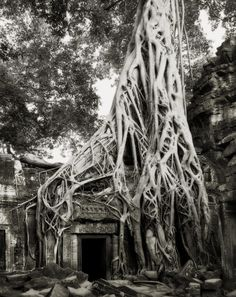 Photographer Spends 14 Years Capturing The World's Beautifully Rare And Ancient Trees