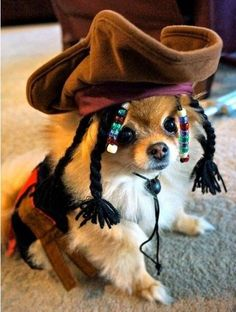 Puppy in pirate costume. Cute.